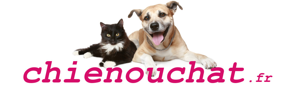 Chienouchat